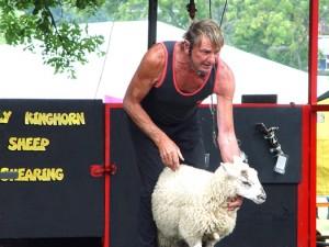 Sheep shearing at the Lambeth Country Show
