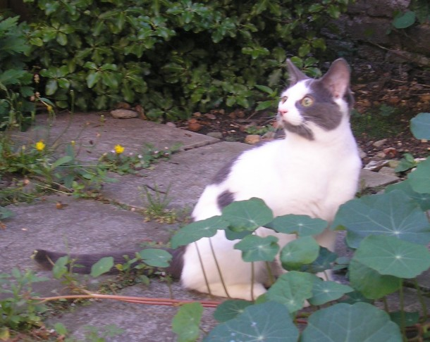 Phoebe has been missing from Tunstall Road since January 10