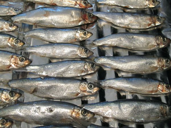 close up sprats