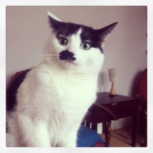 MISSING MOGGY MIMI: Gone since yesterday