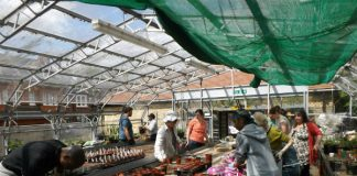 Myatt's Fields Park: the greenhouse in action