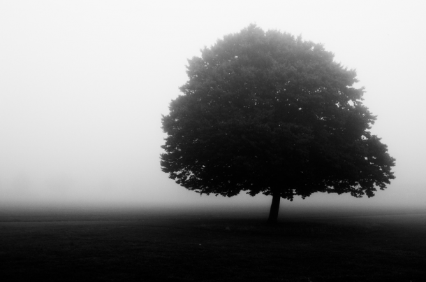 Brockwell Park in Fog by Alistair Hall tree Flickr