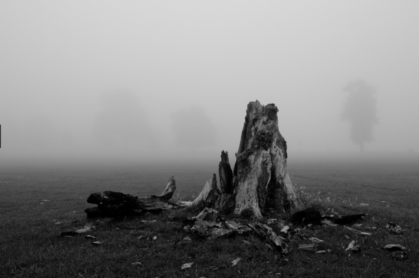 Brockwell Park in Fog by Alistair Hall plants stump