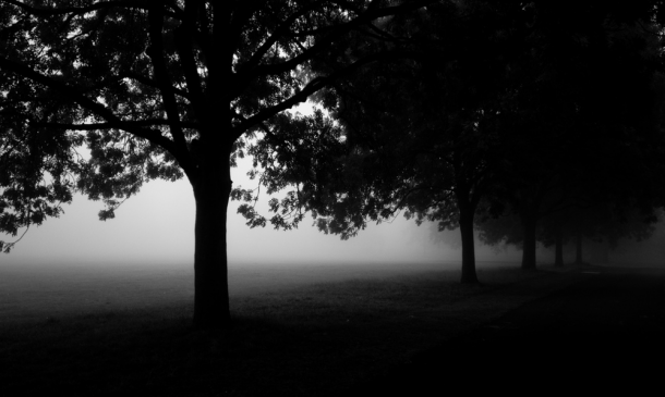 Brockwell Park in Fog by Alistair Hall avenue