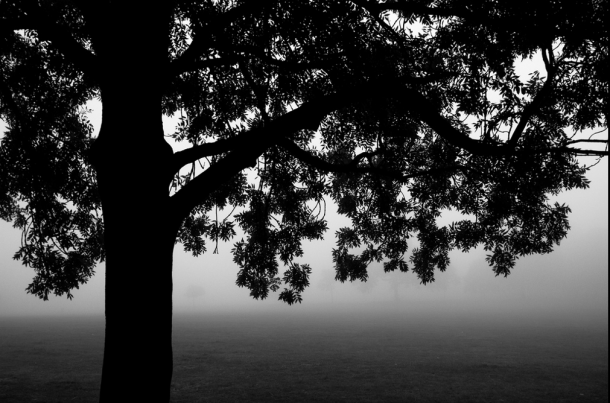 Brockwell Park in Fog by Alistair Hall tree