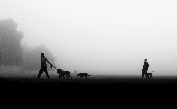 Brockwell Park in Fog by Alistair Hall Boxers