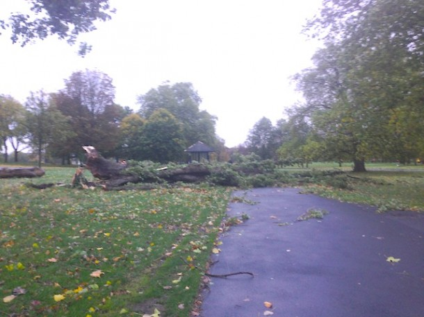 DOWN: Trees in Brockwell Park. Picture by Alex Hadden.