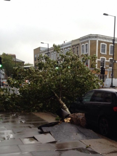 DAMAGE: This pic of a downed tree was taken by Lucy Keeler (@LucyAstrid) on Twitter.