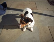 Dot is missing from Herne Hill