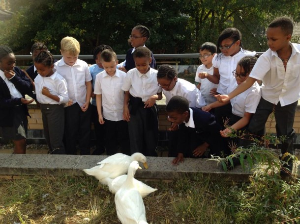 Christ Church pupils with the ducks