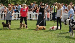 "The line up for ""Handsomest Dog"". Credit: Rory Huston"