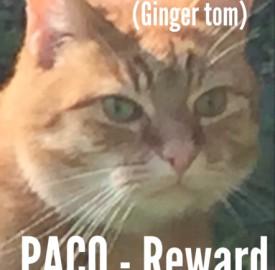 Paco, missing cat