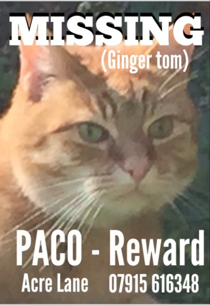 Paco, missing cat