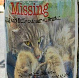Missing cat Brixton