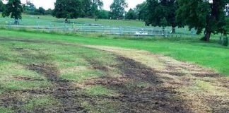 Mud in Brockwell Park