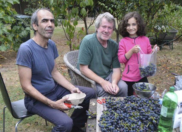 John (centre) with neighbours Manoucher and Sonia bagging the grapes