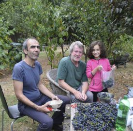 John (centre) with neighbours Manouchehr and Sonia bagging the grapes