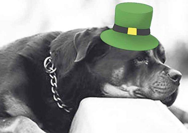 Dog in Irish hat