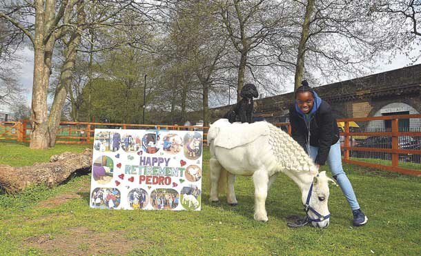 Pedro the pony with retirement banner