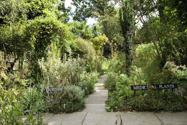 South London Botanical Institute Garden