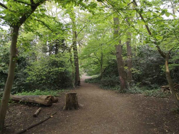 Dulwich Wood. Picture: James Cracknell