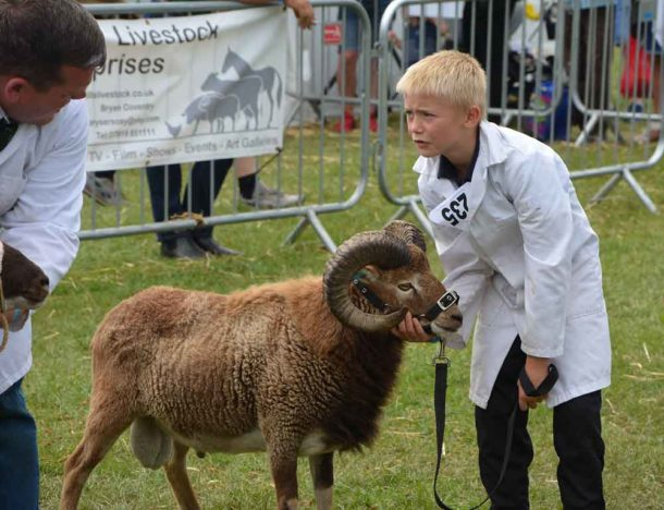 Sheep show last year