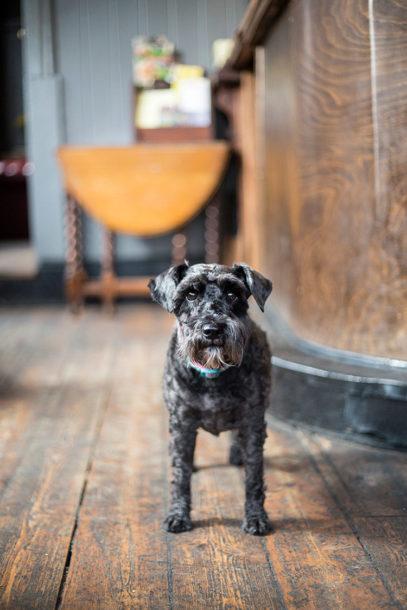 Murphy – The Elm Park Tavern