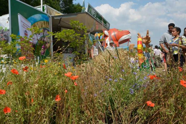 Wild flowers at the NFU discovery barn