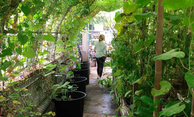 Brockwell Greenhouses