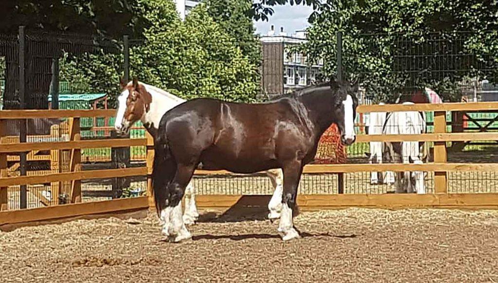Horses at Ebony Horse Club
