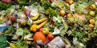 Picture of waste food