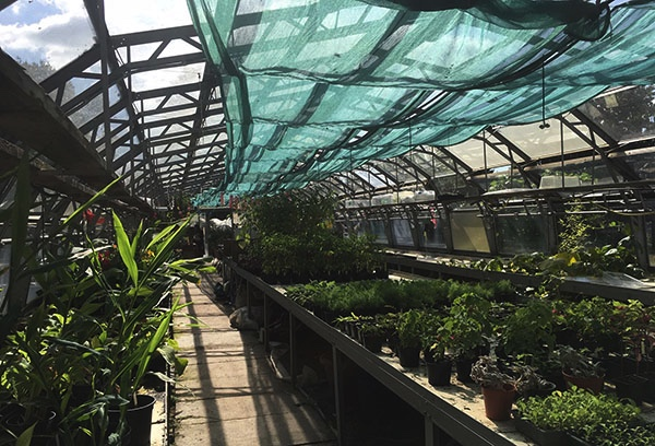 inside of Brockwell Park Community Greenhouse