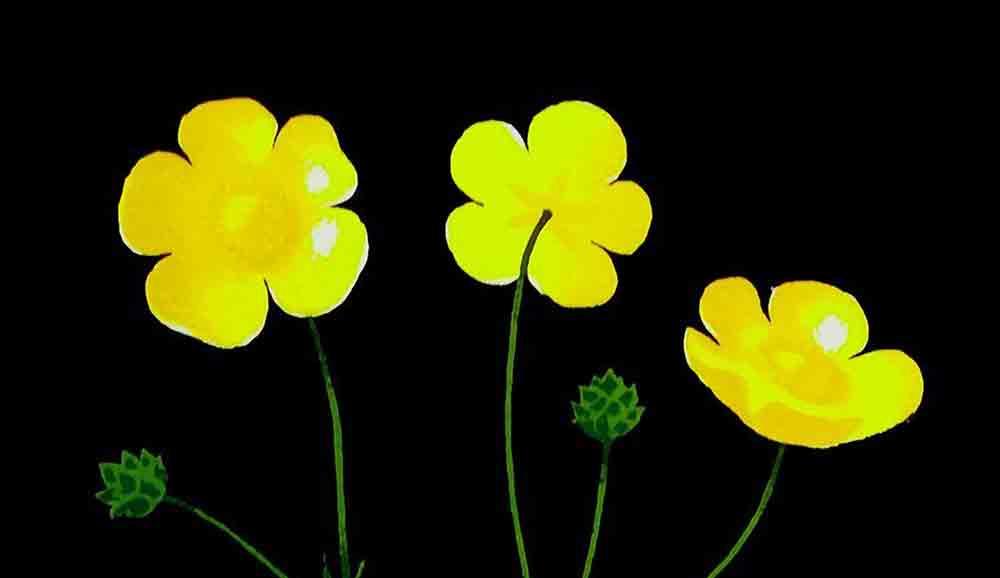buttercup motif