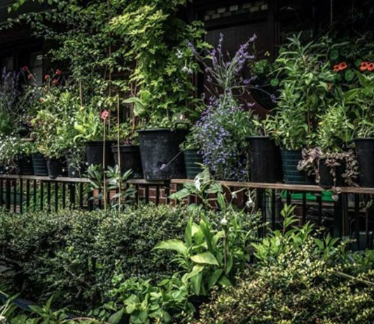 "Last year's winner in the doorstep gardening category was Hardy House. Award recipient: ""I feel like I just won a BAFTA"""