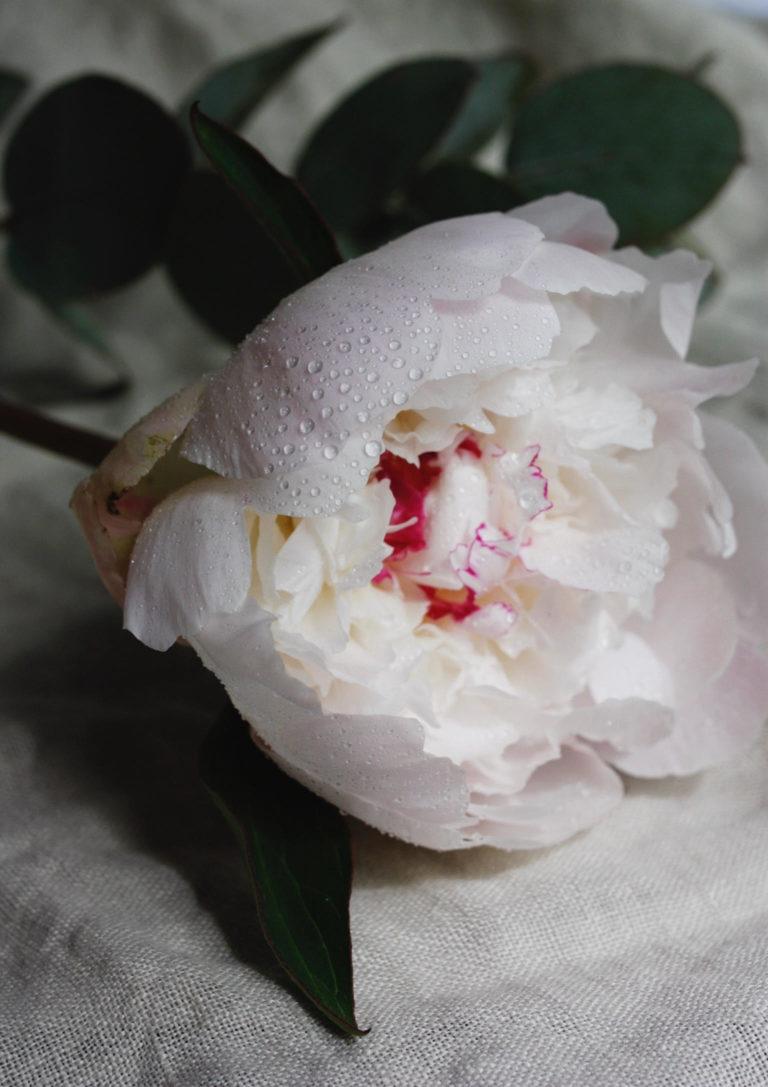 Fresh Seasonal Flower Bouquets