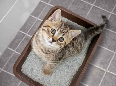 USED cat litter required