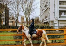 youngster on horse in urban environment