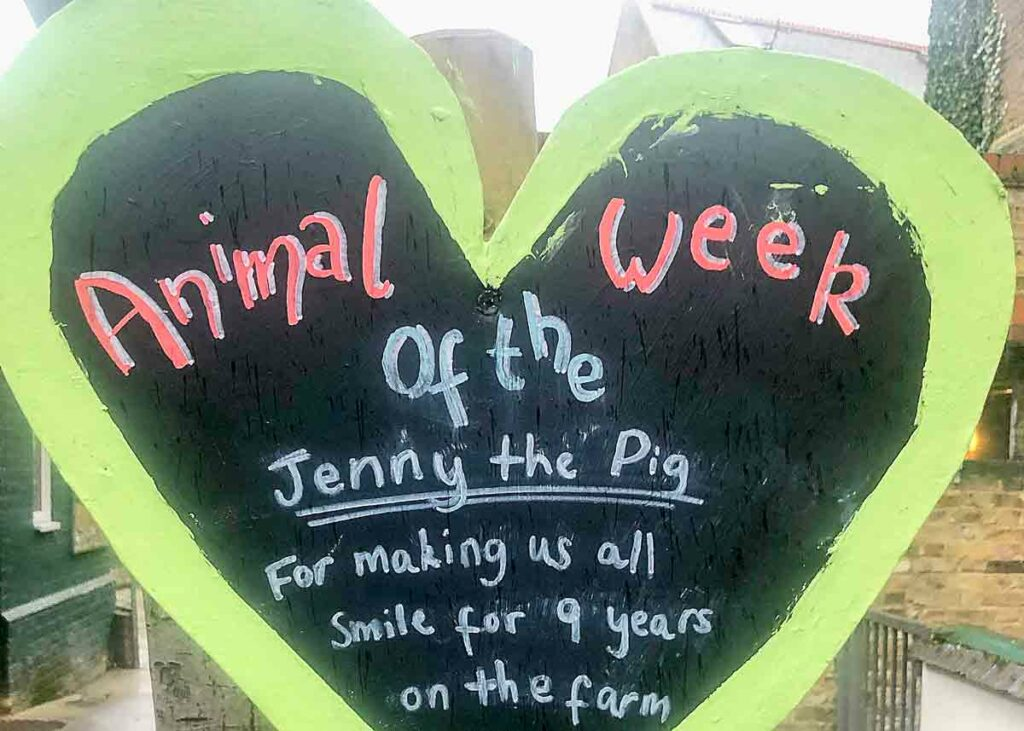 animal of the week sign