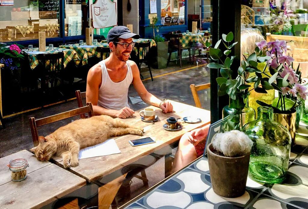 cat on cafe table