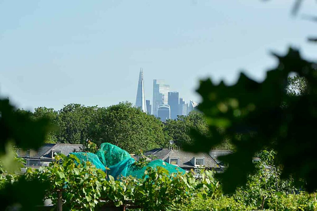 distant view of tall buildings from leafy setting