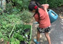 child watering plants from large can